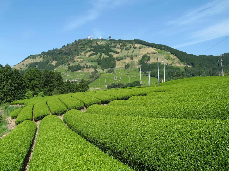 Kakegawa que cozinha em vapor chá profundamente