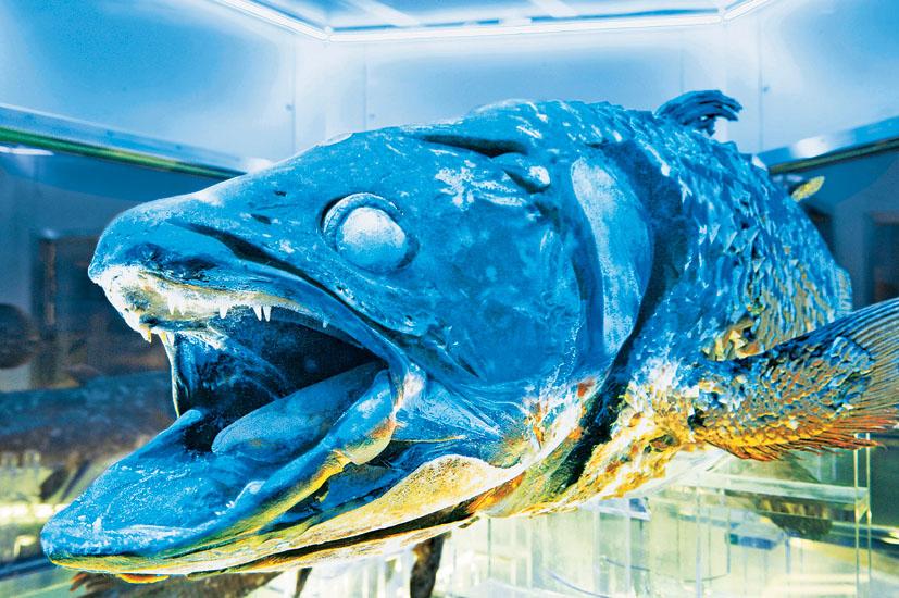 Bảo tàng Numazu Deepblue Aquarium coelacanth