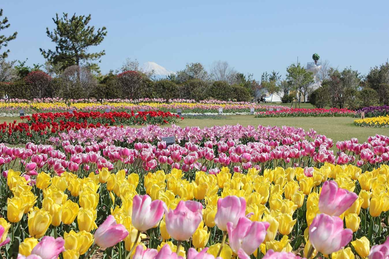 Shizuoka Prefectural Yoshida Park