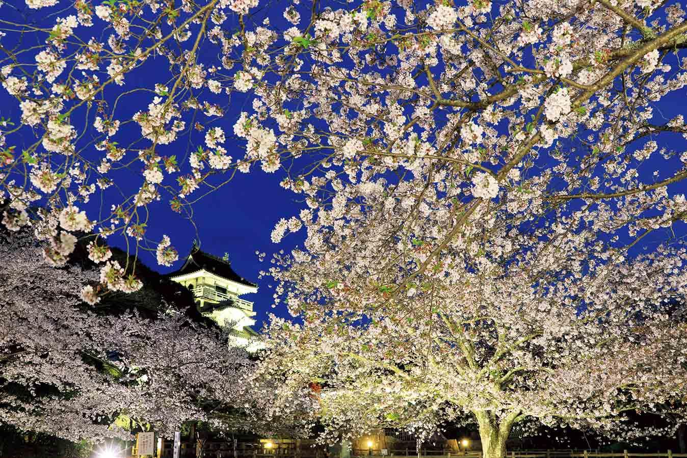 Spring in Yoshida